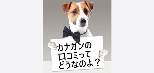 ホワイトボードを持つ犬の画像