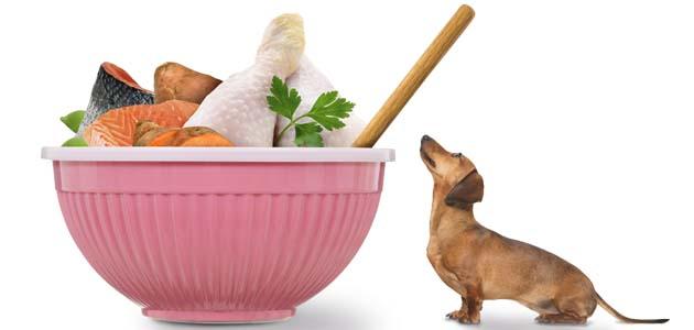 食材を眺める犬の画像