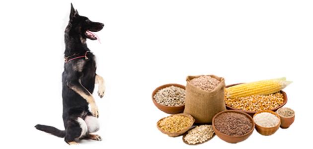 穀類を見つめる犬の画像