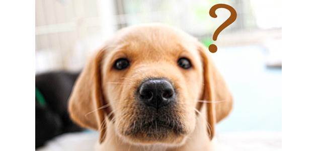 悩む犬の画像