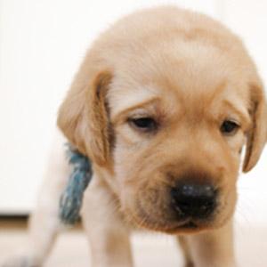 オムツをした犬の画像