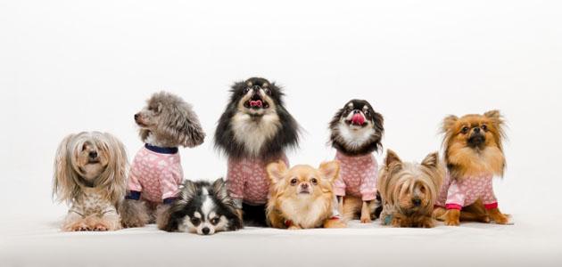 いろいろな犬の画像