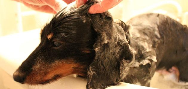 シャンプーされる犬の画像