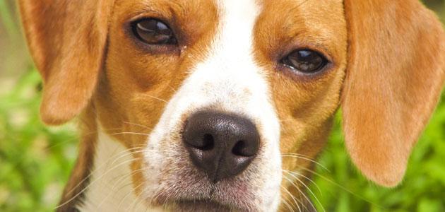 成犬の画像