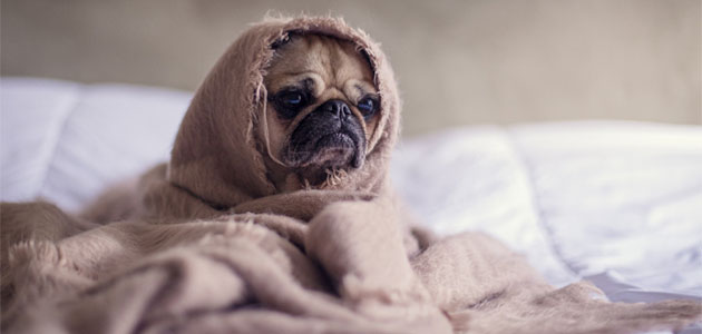 犬のヒートに前兆はある?