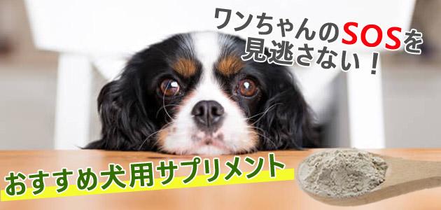 愛犬のSOSを見逃さない!お悩みケアにおすすめな犬用サプリ
