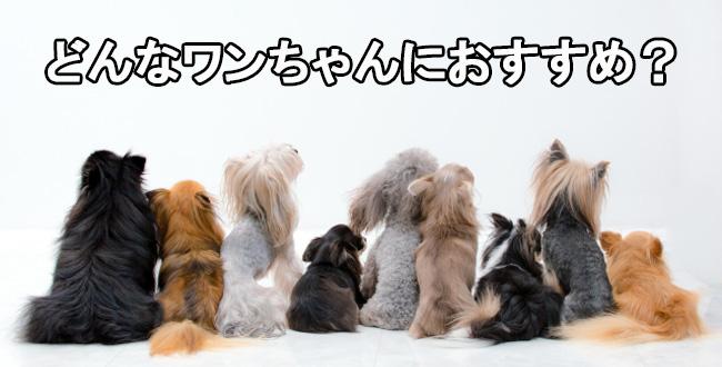 うまかけはどんな犬におすすめ?