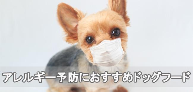 アレルギー予防におすすめランキング